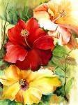 glorious-hibiscus-priscilla-powers